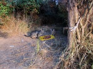 els voluntaris faciliten menjar diariament als gats de les colònies